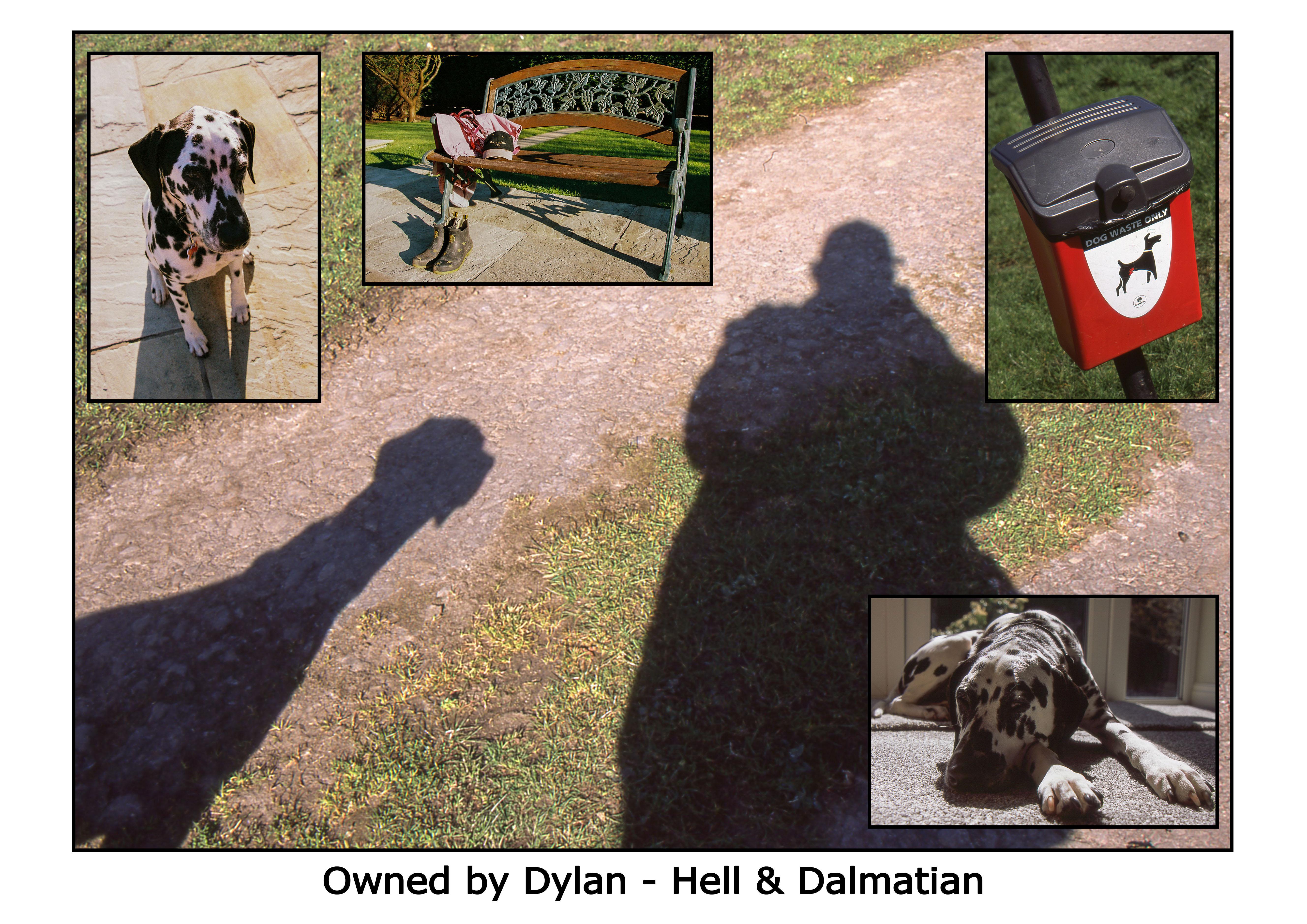 Hell&Dalmatian