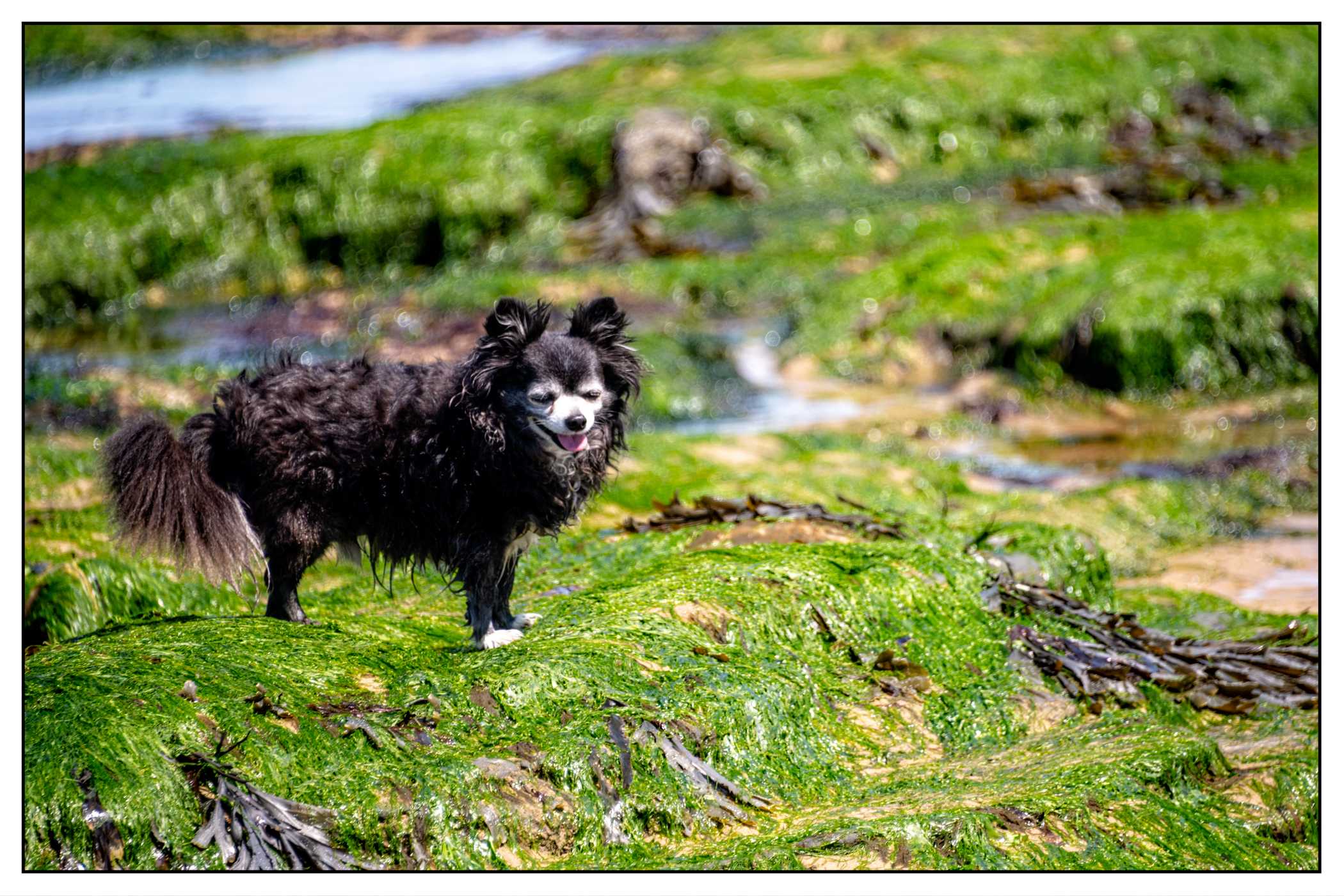 Pets_Environmental-11