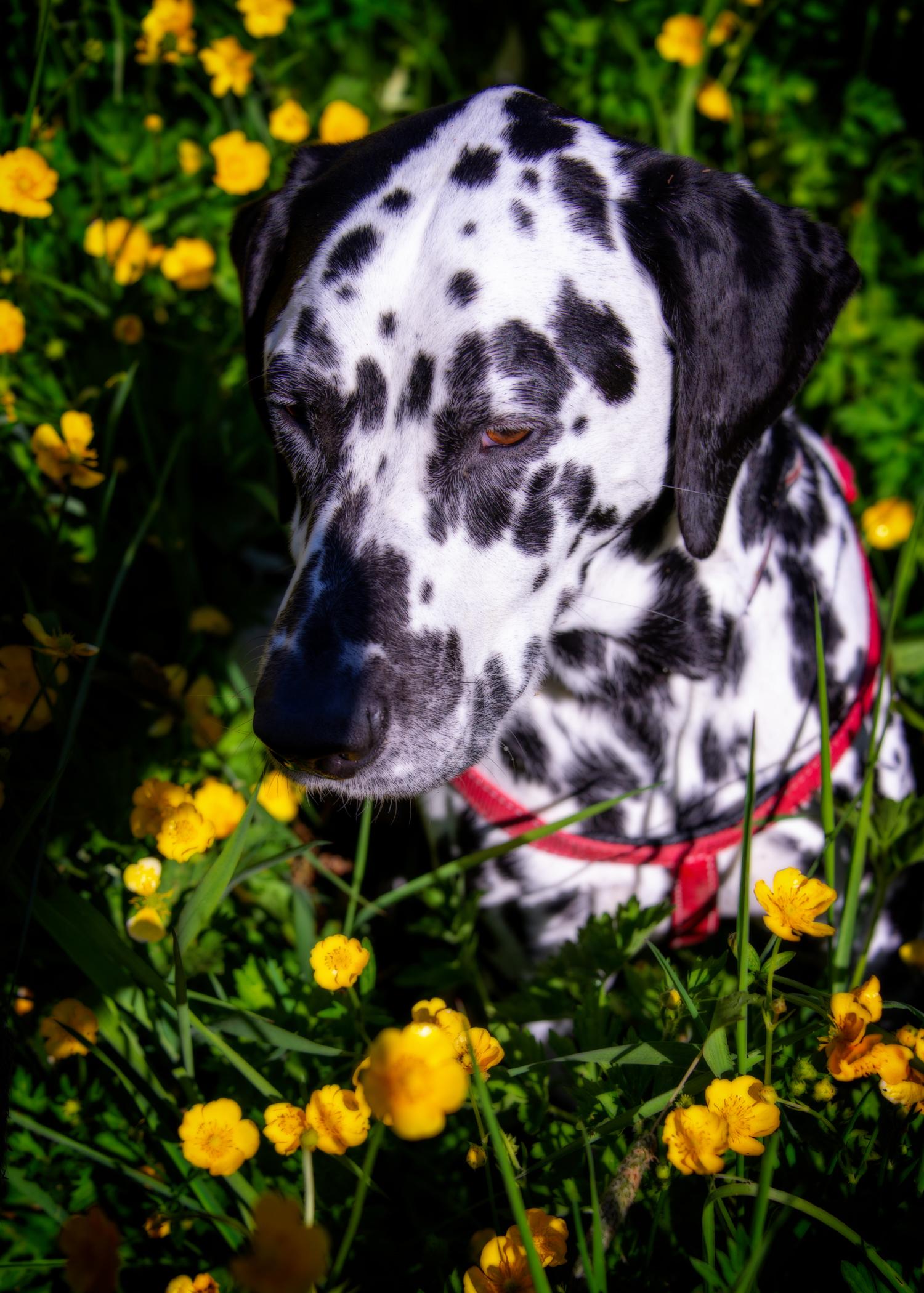 Pets_Environmental-13