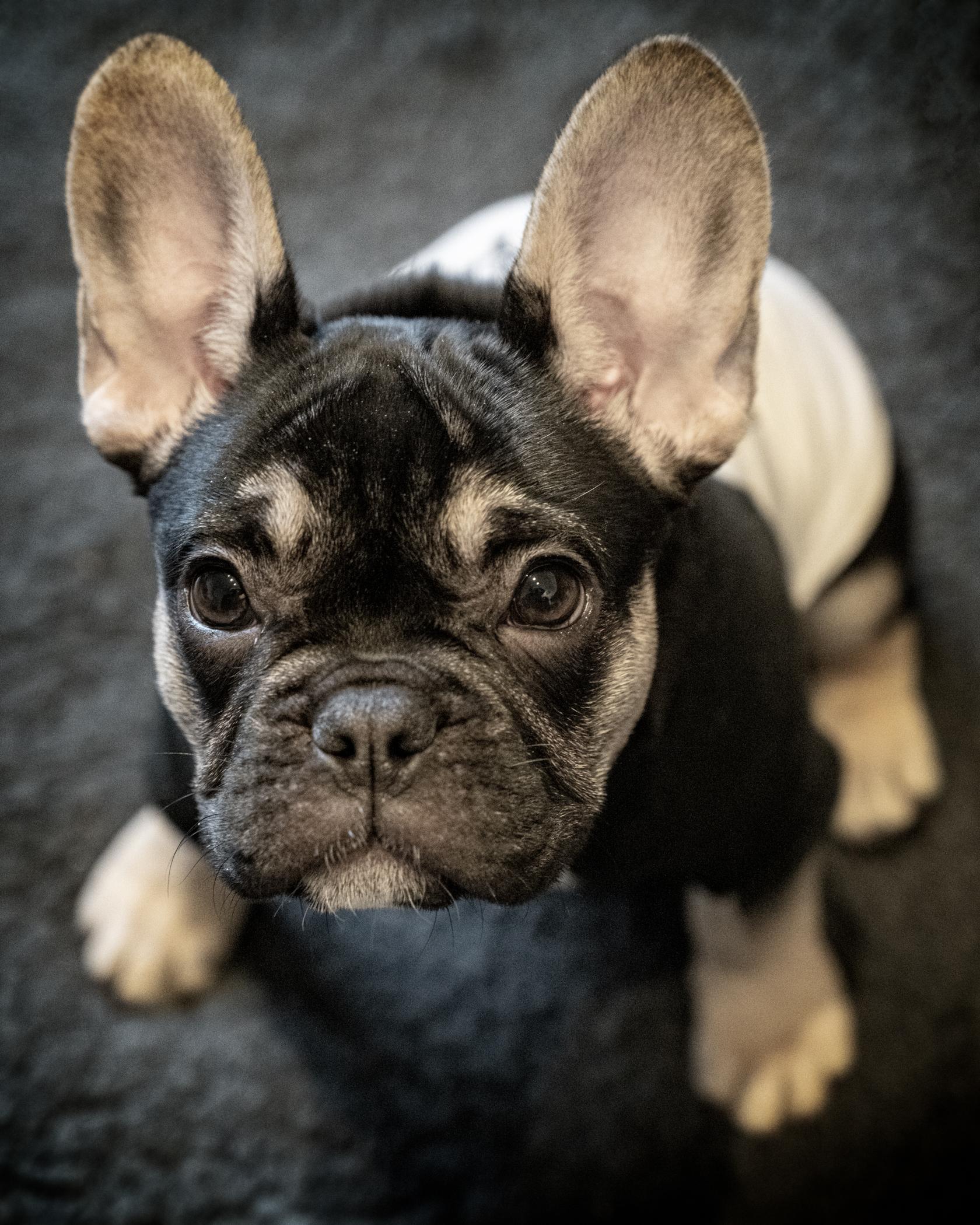 Pets_Studio-1